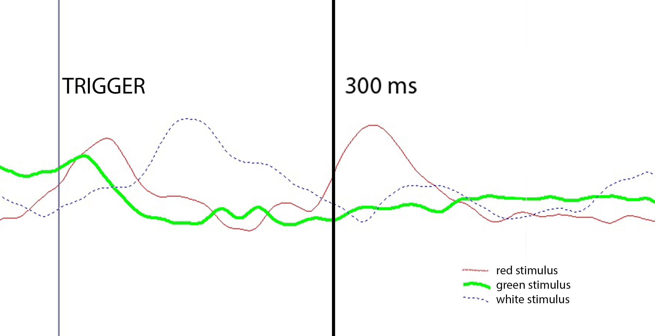Le p300 elicitate dai trigger rari generati durante la simulazione cognitiva